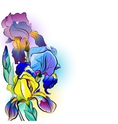 Flower bouquet of irises vector