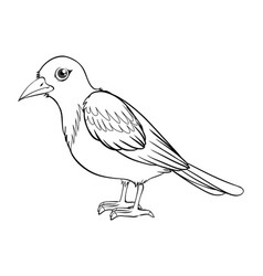 Animal outline for bird vector