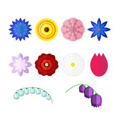 flowers isolated on white background set vector image
