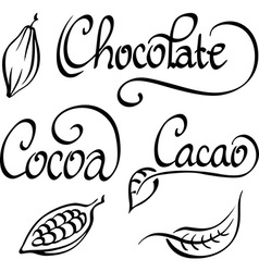 Chocolate cocoa cacao text vector
