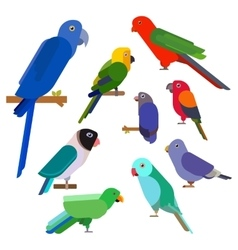 Cartoon parrots collection Parrot wild animal vector image vector image