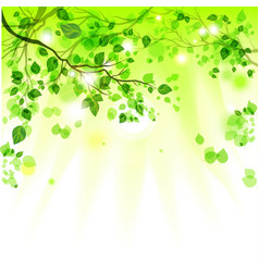 Spring leaves light background vector image
