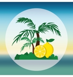 Lemon fruit and summer concept vector
