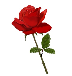 Beautiful red rose object isolated vector