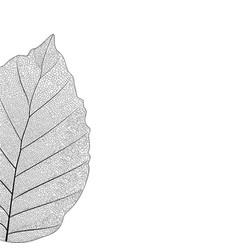Botanical series elegant single detailed partial vector