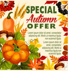 Autumn sale fall season special offer poster vector