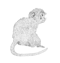 Hand drawn sitting monkey sketch style vector