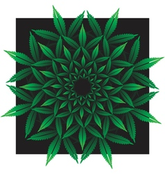 Round pattern from cannabis leaf on black vector image vector image