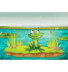 a frog and a water vector image
