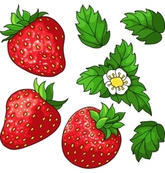 Set ripe juicy strawberries vector image