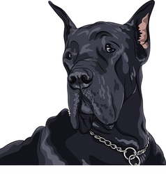 Black dog great dane breed vector