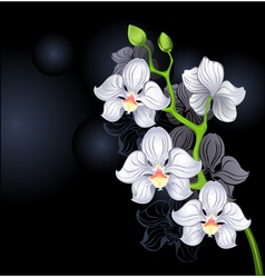 White orchids vector