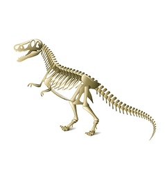 Dinosaur skeleton isolated vector