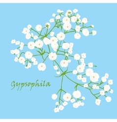 Branch of beautiful hand-drawn gypsophila vector