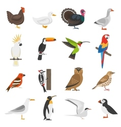Bird flat color icons set vector