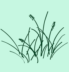 sketch a bunch of grass vector image vector image
