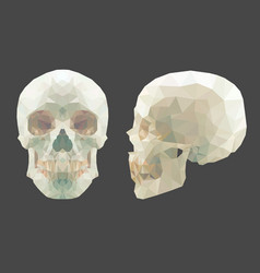 white low-poly skull on white background vector image