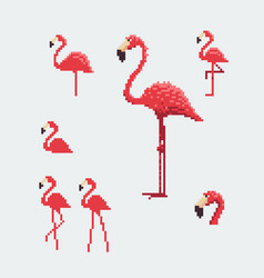 Pink flamingo icons set pixel art style vector
