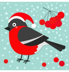 Bullfinch winter red feather bird rowan rowanberry vector