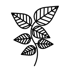 Mint leaves isolated icon design vector image