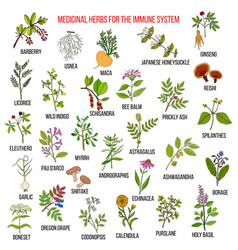 Best medicinal herbs for the immune system vector