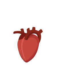 Human organ icon vector
