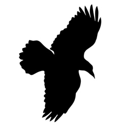 black silhouette of raven vector image vector image