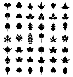 leaves of trees vector image