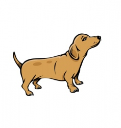weiner dog vector image