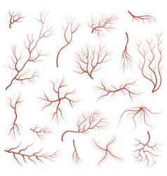 cartoon vein blood set vector image