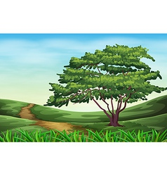A beautiful landscape with a tall tree vector image vector image