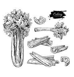 celery hand drawn set vector image vector image