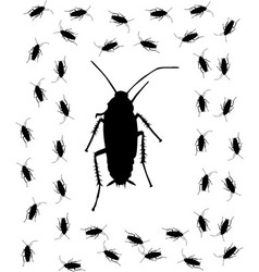 Cockroach brush vector