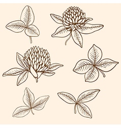 Hand drawn clover flowers vector
