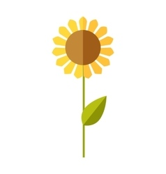 Sunflower wheat corn vector