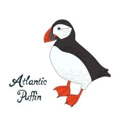 Bird atlantic puffin vector