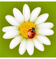 chamomile and ladybug vector image vector image
