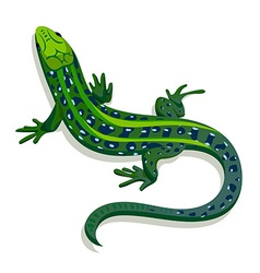Green lizard vector image