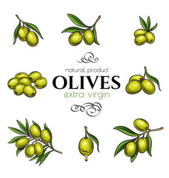 set hand drawn olives vector image