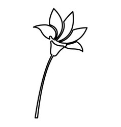 Figure flower with pointed petals icon vector