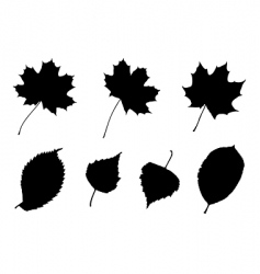 leaves silhouettes vector image vector image