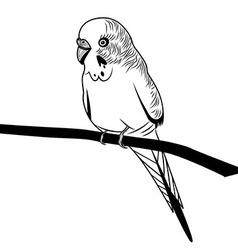 Parrot budgie bird head for t-shirt Sketch tattoo vector image