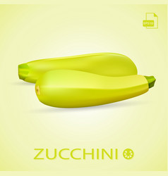 set of fresh ripe zucchini isolated on a vector image vector image