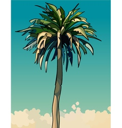 cartoon drawn tall sprawling decorative palm tree vector image