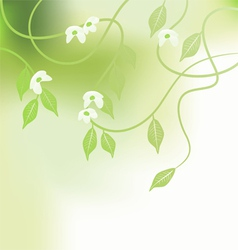 Leaves spring - background vector image