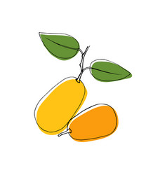 vintage style hand drawn kumquat fruits vector image