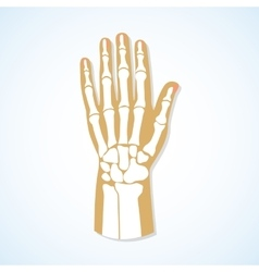 Flat design of hand and skeleton vector