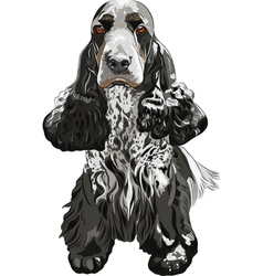 Gun dog english cocker spaniels sitting vector