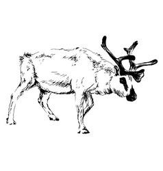 Hand sketch reindeer vector
