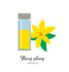 Ylang-ylang essential oil with flowers isolated on vector